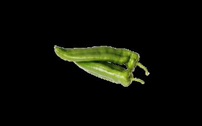 Peperone verde friggitelli